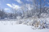picture of blanket snow  - Frozen pond and trees under blanket of snow in Marthaler Park of West Saint Paul Minnesota - JPG