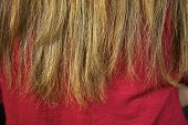 image of split ends  - Terrible destroyed long hair split ends closeup - JPG