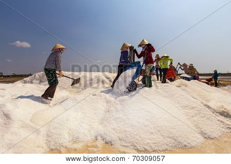 workers are pouring salt collected to heap of salt at Binh Thuan, Vietnam