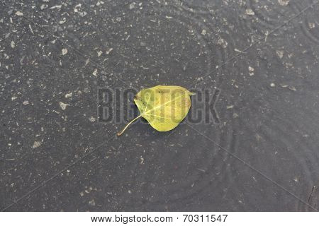 Leaf In Wave