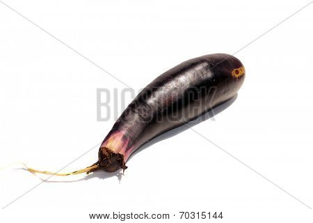 Fresh Picked Egg Plant isolated on white with room for your text. Egg Plant is enjoyed by people around the world in various dishes and meals. Some consider it a magical fruit with no evidence of such