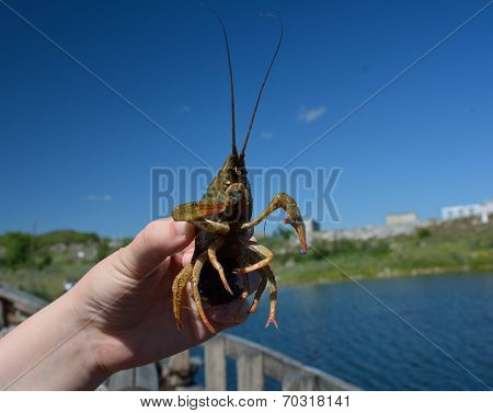 A Crabfish In Hands