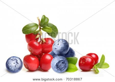 Forest berry cowberry and  blueberry with leaves isolated.