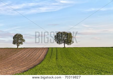 Fields with trees, Pfalz, Germany