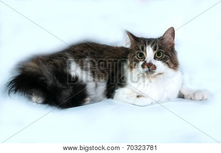 Longhaired White Cat With Spots Lying On Gray