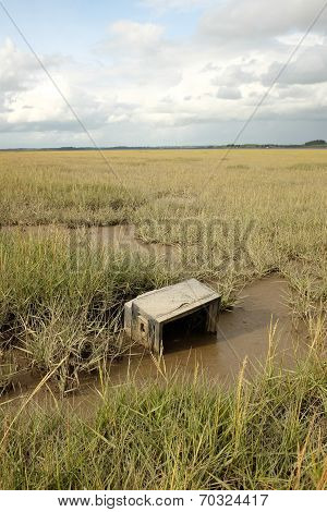 Television In Marsh.