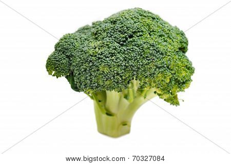 Healthy Organic Broccoli Head Isolated On White