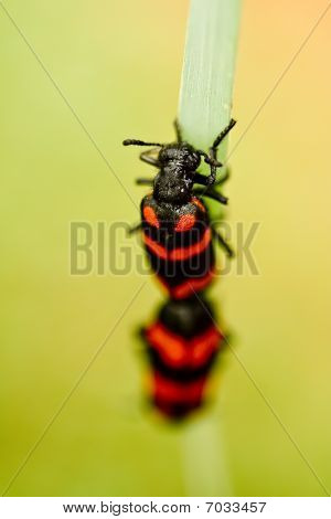 Bugs Life series