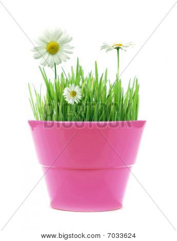 Spring In A Pot