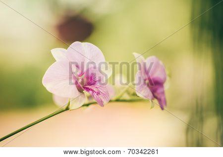 Pink Orchid Flower Vintage