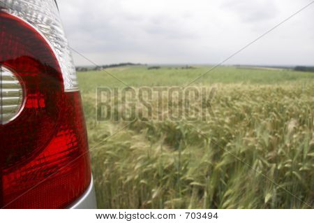 rear light in wheatfield - landscape