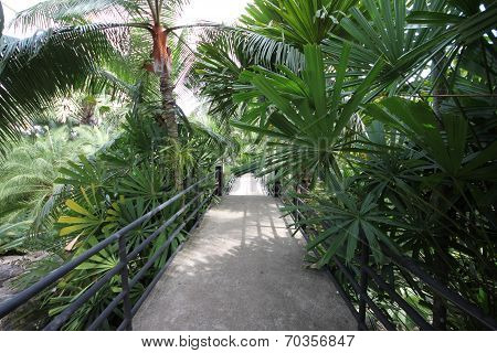 A footpath with a railing in a tropical forest with plant and trees in the Nong Nooch tropical botan