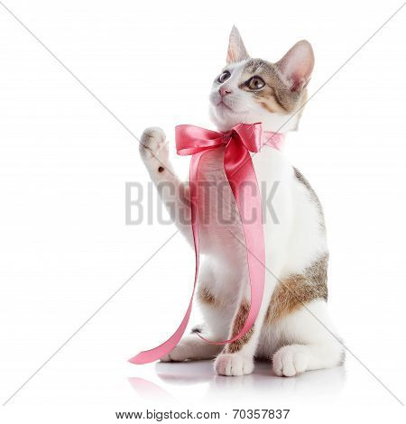 Kitten With A Pink Bow.