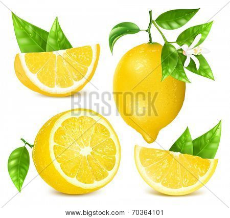 Collection of different vector illustration of fresh lemons with leaves and blossom. Vector illustration contains gradient mesh.