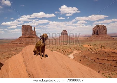 Dog In Monument Valley