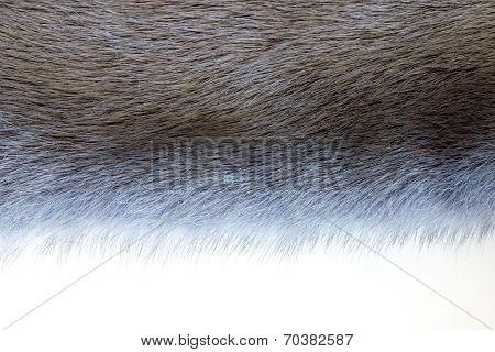 Fluffy Texture Of Fur Wild Animals