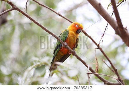 Parakeet Or Parrot Is Sleeping On Tree Branch.