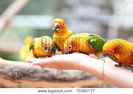 Many Of Parrot Is Eating Foods.