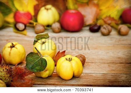 Autumn fruit - Autumn harvest