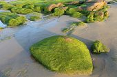 image of lien  - Moss on stones in the morning at Co Thach beach , Tuy Phong , Binh Thuan province , Vietnam. This happens only in Spring. Binh Thuan has a lot of famous resorts.
