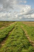 pic of marshlands  - Lush green grass and a track on a dyke running through marshland with a blue cloudy sky in the distance - JPG