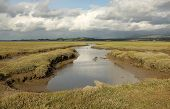 stock photo of marshlands  - A stream extends across the marshland of Foryd Bay Caernarfon Gwynedd Wales UK - JPG