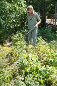 pic of pesticide  - peasant sprays pesticide on potato plantation in garden in summer - JPG