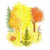 image of maple tree  - Vector background with autumn forest - JPG