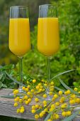pic of mimosa  - Two glasses of mimosa cocktail outdoors against lush foliage - JPG