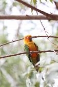 pic of parakeet  - parakeet or parrot is sleeping on tree branch in the garden - JPG