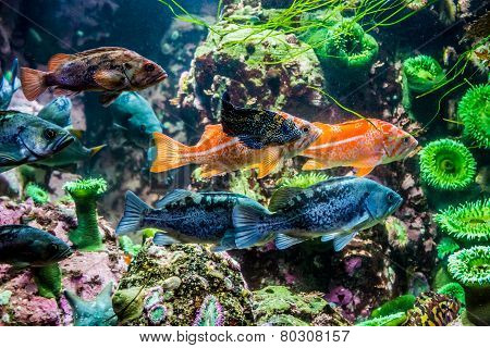 Several Interesting Colorful Grouper-like Fish.