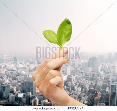 people, ecology, biology and environment concept - close up of woman hand with green sprout over city background