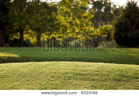 Backlit View Of Lawn With Background Trees