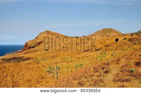Dry Vegetation Over Ocean