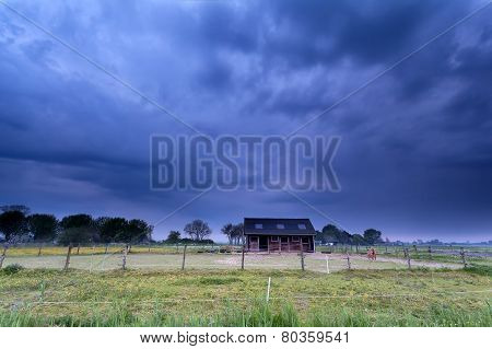 Pony On Farmland At Stormy Morning