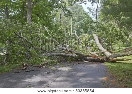 Tree Road Hazard
