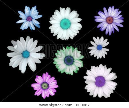 Surreal Daisies in  Blue