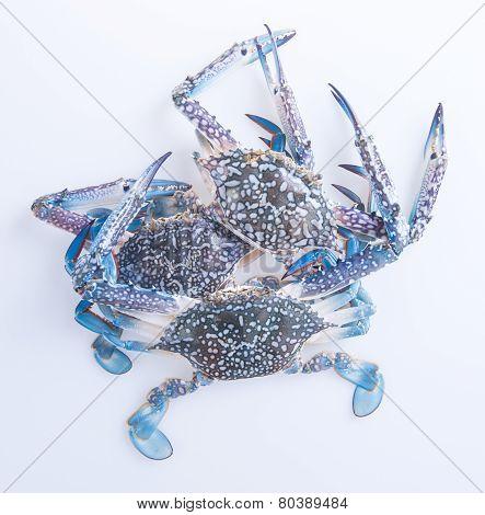 Crabs. Crabs On The Background. Crabs On The Background