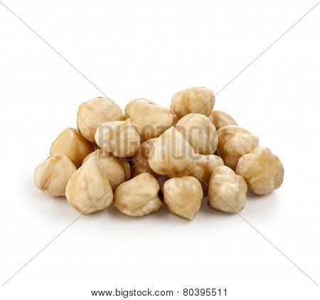 Hazel Nut I