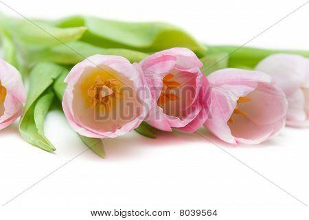 Bouquet Rose Tulip