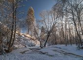 pic of frozen  - Broken ice of frozen river in winter forest point of view from frozen water - JPG