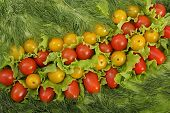 image of greenery  - Still life from tomato and two different greenery - JPG