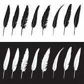 stock photo of feathers  - Vector group of feather on white background and black background - JPG