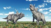 picture of dinosaur  - Computer generated 3D illustration with the Dinosaur Diabloceratops - JPG