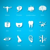 stock photo of internal organs  - Vector icon set of human internal and external organs like uterus prostate brain skin breast tooth eye neuron nose ear blood vessel and lymphonodus in flat style - JPG