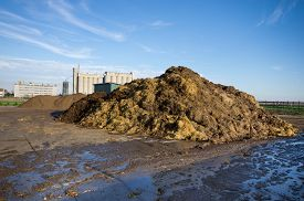 picture of mud pack  - Cow manure on pile on the farmland - JPG