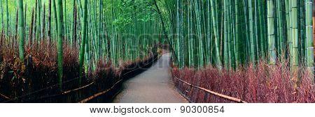Bamboo Grove panorama in Arashiyama, Kyoto, Japan.