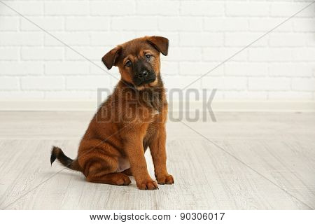 Cute puppy in room on brick wall background