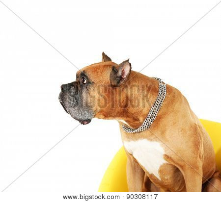 Cute dog and girl with sausage  isolated on white background