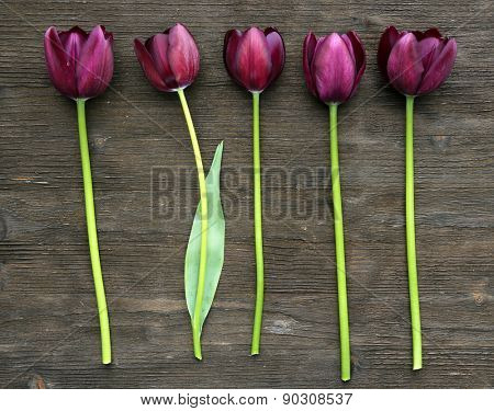 Beautiful violet tulips on wooden background